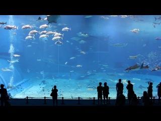 Самый большой в мире аквариум. Атланта, Джорджия, США.