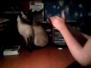 Кот отгадывает в какой руке