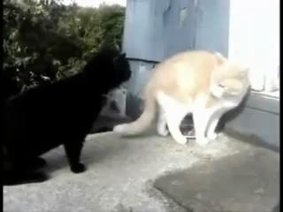 коты ганстра