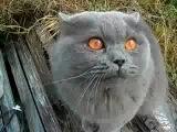 Говорящий кот Кузя !!! Гад))