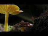 Infected Mushroom - Shakawkaw