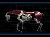 Анатомия и биомеханика