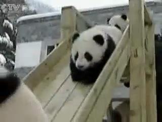 Панда - малыши катаются с горки ツ