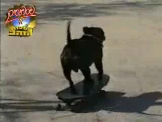собака катается на скейт борде