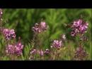 BBC: Йеллоустоун - Борьба за жизнь / BBC: Yellowstone - Battle For Life (2009) фильм 2