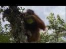 Док. фильм BBC: Жизнь / BBC: Life (2009) Серия 10 - Приматы