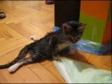 Яша! Парализованный котенок, которого разорвала собака.