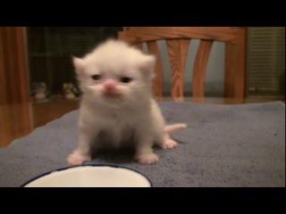 самый красивый красивый и няшный котёнок
