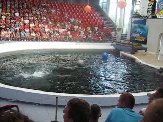 так называется футбол у дельфинов