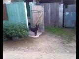 собака и дверь