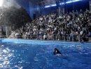 Дельфины любят и танцуют как люди!