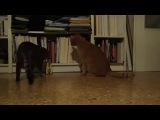 Коты и метроном. Очень смешно!