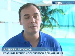 Московский дельфинарий отбил атаку рейдеров и спасает своих питомцев