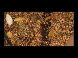 финальные кадры безумно красивого трейлера фильма