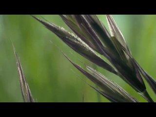 Красивые моменты пробуждения природы. Красивая музыка!Удивительное пробуждение природы.