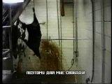 Видео присуждающее людей на вегетарианство.Жэсть бедняжки...не люди а монстры..я необабщаю я говорю про тех кто так делает...