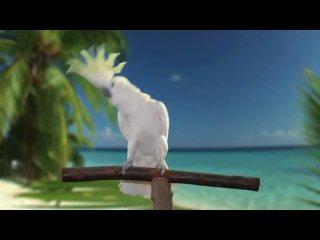 Попугай Snowball снялся в рекламе