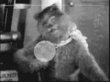Кот-психоделик и мышь-эпилептик - Призыв ВИD 25 кадр!!! ПИЗДЕЦ КАК СТРАШНО!!! СЛАБОНЕРВНЫМ ЛУЧШЕ НЕ СМОТ
