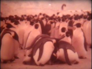 Императорские пингвины / 1991