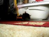 Как я понимаю этого кота, когда просыпаюсь утром