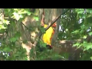 Treeclimbing euro championships