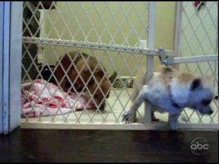 Большой побег маленькой собачки