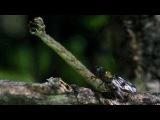 аццкая плотоядная гусеница