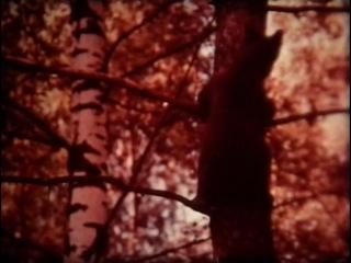 ФЛОРА И фАУНА ЗЕМЛИ. Наш рассказ о животных / 1984