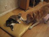 Кот не дурак... облюбовал новое место
