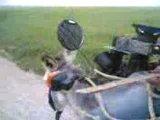 ишак в тюненге