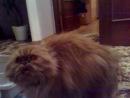кот говорящий терминатор 4