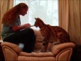 Ашера, кошка за 17000 евро