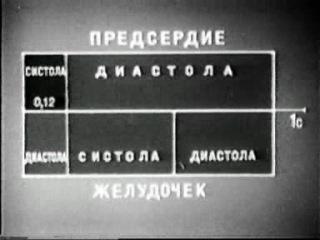 ФИЗИОЛОГИЯ ЧЕЛОВЕКА-СЕРДЕЧНЫЙ ЦИКЛ!!!!!!!!!!!!!!!