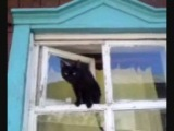 Кошка угарает))))))