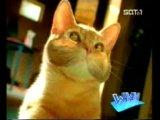 Реклама кошачьего туалета!!! Ну очень смешно))))