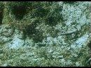 ТРОПОЙ БЕСКОРЫСТНОЙ ЛЮБВИ СССР 1971 Первый фильм тетралогии о ручной рыси по имени Кунак