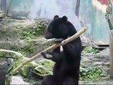 Медведь хуячит палкой словно монах