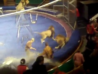 Трагедия во Львове (лев напал на дрессировщика)!