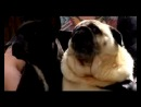 Собака зовёт бэтмена =)