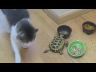 Как вы думаете, кто гроза кошек?! А вот и не угадали