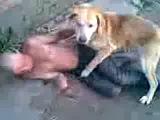 Собака трахает алкаша:D