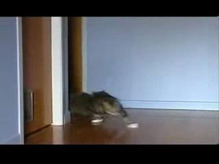 Гонки (форсаж) ....коты жгут:3333