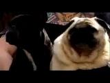 Я под столом!!! Собака зовет БЭТМЕНА!!  XD )))