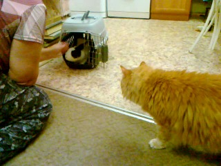 Кот и кролик, первая встреча