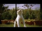 Кот (Король Лев)