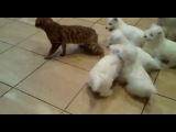 Кот, котик, щенки, прикол, смешно, щенки