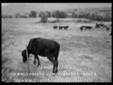 UFO Cow Abduction by Aliens on