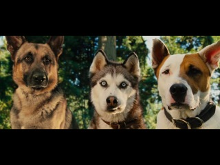 Классный  танец собак из фильма Мармадюк