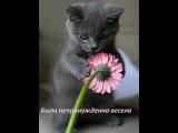 Женщина - Кошка