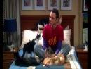 Теория Большого взрыва  The Big Bang Theory - 3 сезон 6 серия